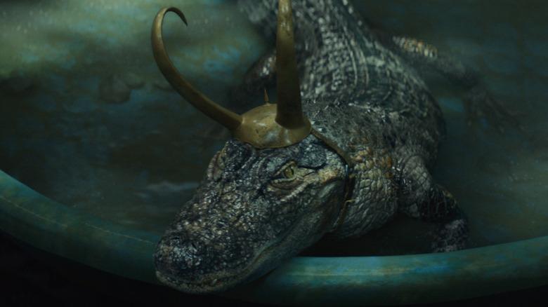 Alligator Loki in pool
