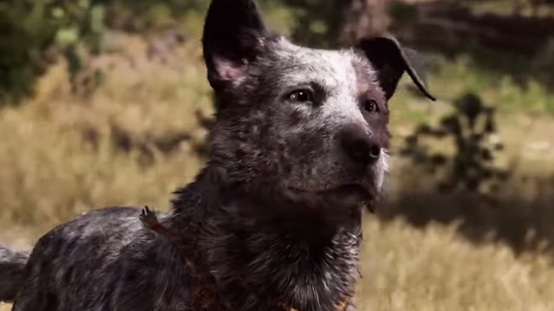 Boomer Far Cry 5 Looking into Distance