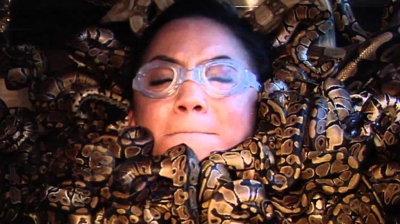 Fear Factor snakes