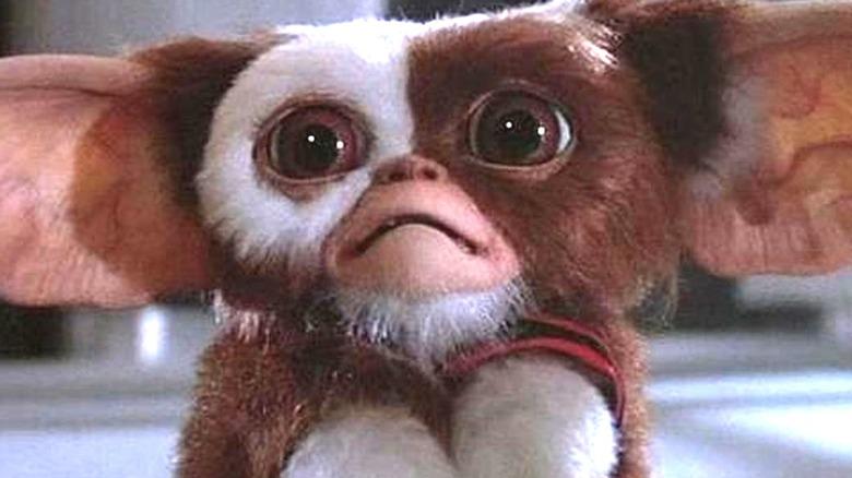Gremlins Gizmo Worried Face