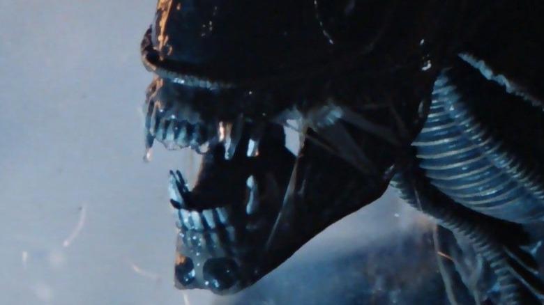 A Xenomorph Alien