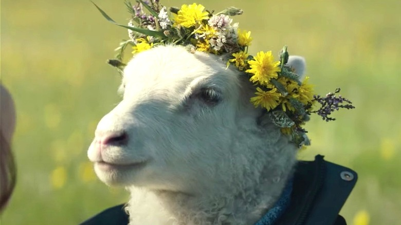 The lamb wearing a flower crown