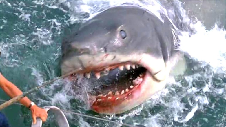 Shark attacking Chief Brody
