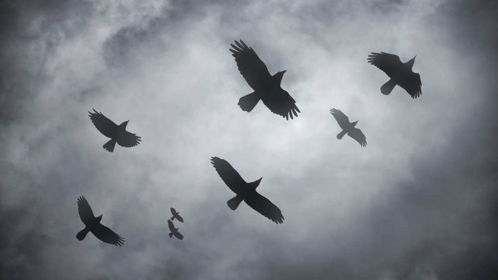 A flock of ravens flying against a cloud sky