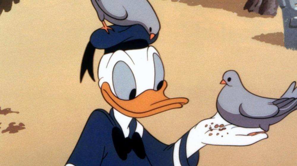 Donald Duck feeds the birds