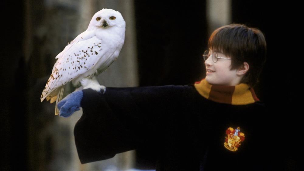 Harry Potter holding owl