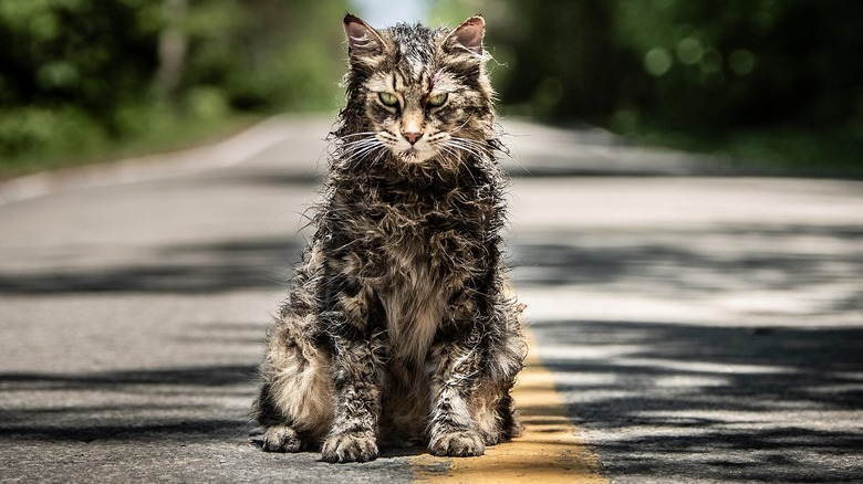 kreepy kat