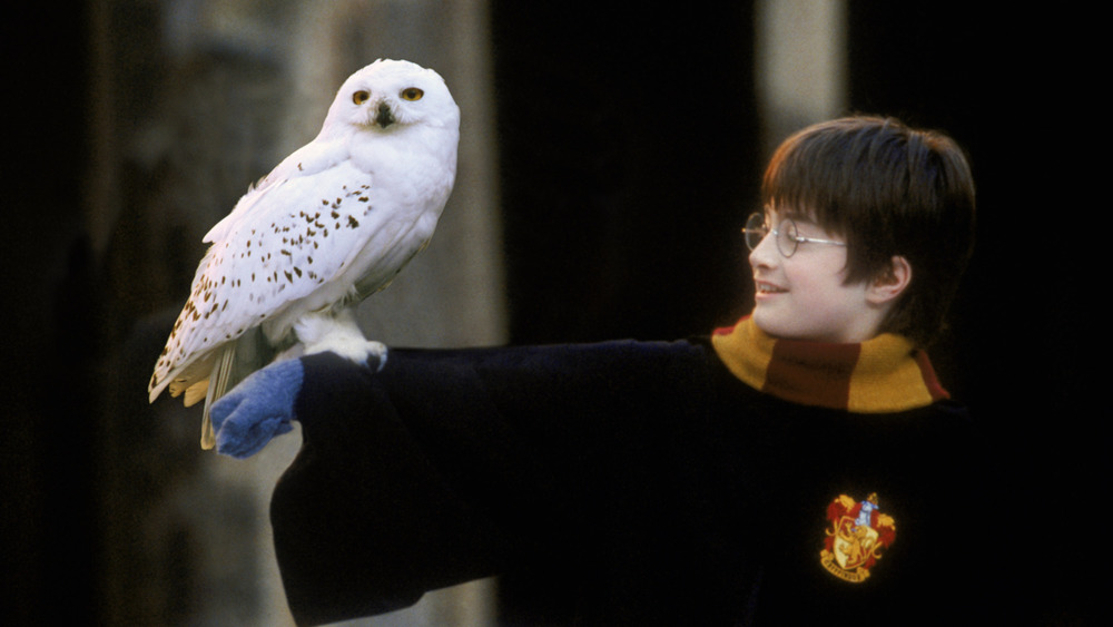 Harry Potter holding his owl